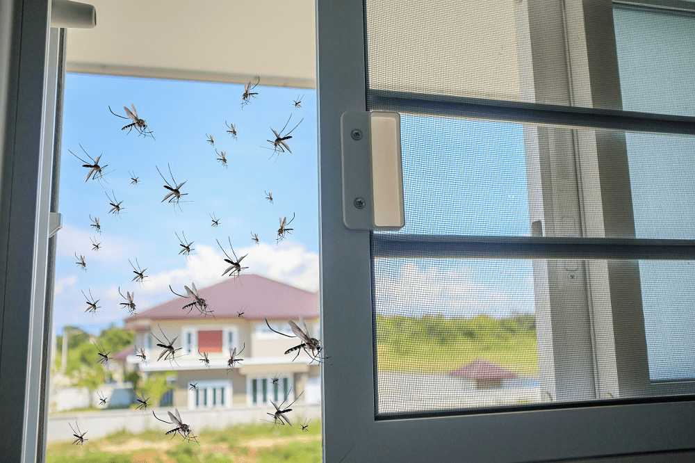 Homeowner Tips Keep Pests Out Window Screens